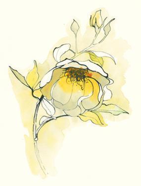 Carols Roses V by Shirley Novak
