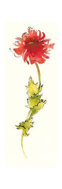 Peony Form Poppies II by Shirley Novak