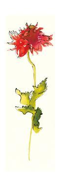 Peony Form Poppies III by Shirley Novak