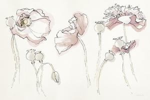 Somniferums Neutral Crop by Shirley Novak
