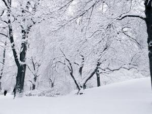Central Park Covered in Snow, NYC by Shmuel Thaler