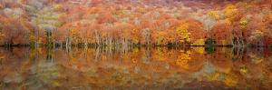 Glowing Autumn by Sho Shibata