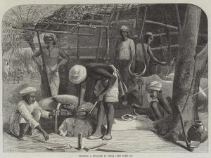 Shoeing a Bullock in India