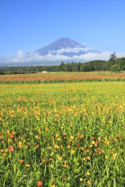 Mount Fuji and Zinnia Flowers, Yamanashi Prefecture by SHOSEI/Aflo