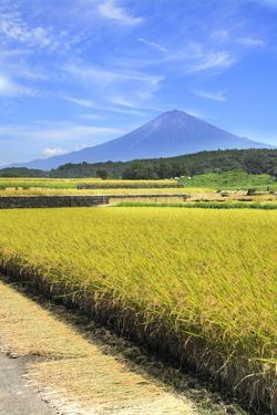 Rice Ears and Mount Fuji by SHOSEI/Aflo