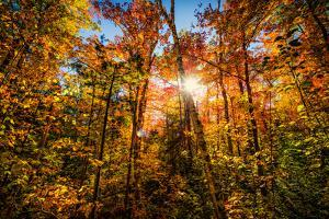 Autumn Glow by SHS Photography