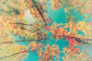 Autumn Leaves up in the Trees - Retro, Faded by SHS Photography