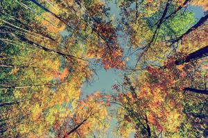 Autumn Tree Leaves - Instagram by SHS Photography