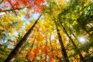 Bright Sun Light through the Tree Leaves in Autumn by SHS Photography