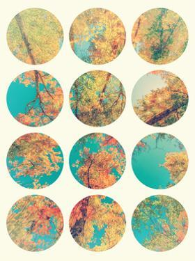 Inspirational Circle Design - Autumn Trees by SHS Photography