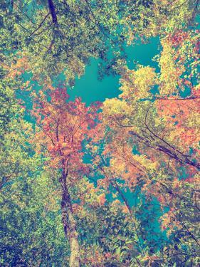 Instagram Autumn Leaves by SHS Photography