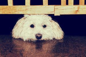 Resting under the Gate - Retro by SHS Photography