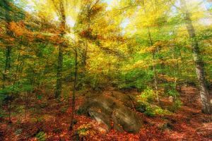 Sun Rays through the Autumn Leaves by SHS Photography