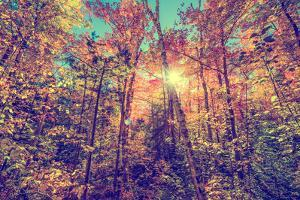 Sun Shining through Leaves in an Autumn Forest - Retro, Faded, Instagram by SHS Photography