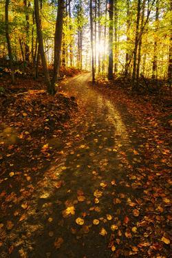 Sunlight Path in A Fall Forest by SHS Photography