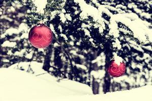 Two Christmas Balls on A Spruce Tree by SHS Photography