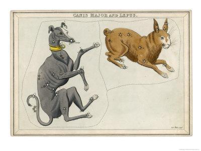 Canis Major (Dog) and Lepus (Hare) Constellation