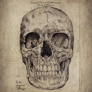 Cranium III by Sidney Paul & Co.