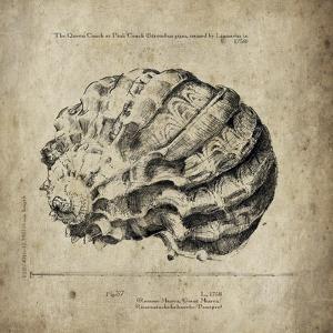 Shell I by Sidney Paul & Co.