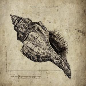 Shell III by Sidney Paul & Co.