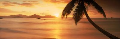 Silhouette of a Palm Tree on the Beach at Sunset, Anse Severe, La Digue Island, Seychelles