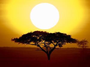 Silhouette of a Tree at Sunrise, Tanzania