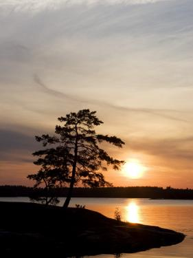 Silhouette of a Tree at Sunset, Baltic Sea, Sodermanland, Sweden