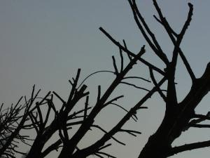 Silhouette of Barren Tree Branches at Dusk