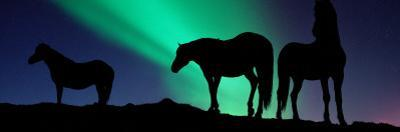 Silhouette of Horses at Dusk, Iceland