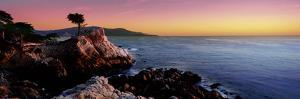 Silhouette of Lone Cypress Tree at a Coast, 17-Mile Drive, Carmel, Monterey County, California, USA