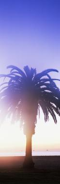 Silhouette of palm tree on beach during fog at sunset, Santa Barbara, California, USA