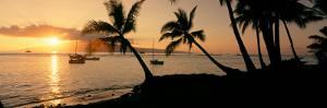 Silhouette of Palm Trees at Dusk, Lahaina, Maui