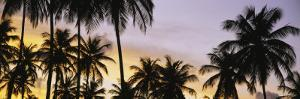 Silhouette of Palm Trees at Sunset, Pigeon Point Beach, Tobago