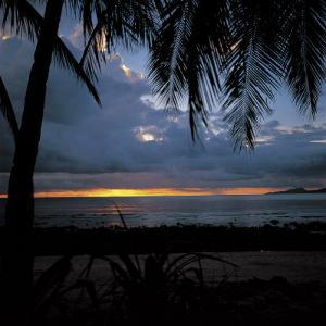 Silhouette of Palm Trees During Beautiful Sunset