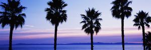 Silhouette of palm trees, Laguna Beach, Orange County, California, USA