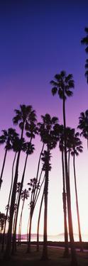 Silhouette of palm trees on beach, Santa Barbara, California, USA