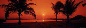 Silhouette of Palm Trees on the Beach at Dusk, Lydgate Park, Kauai, Hawaii, USA