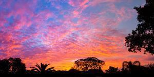 Silhouette of trees and plants at sunrise, Venice, Sarasota County, Florida, USA