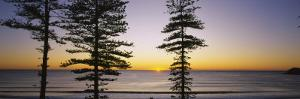 Silhouette of Trees at Dawn, Manly Beach, Sydney, New South Wales, Australia
