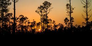 Silhouette of trees at sunset, Everglades National Park, Florida, USA