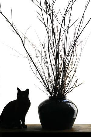 https://imgc.allpostersimages.com/img/posters/silhouetted-image-of-a-cat-by-a-flower-pot-los-angeles-california-usa_u-L-Q1D02HQ0.jpg?p=0