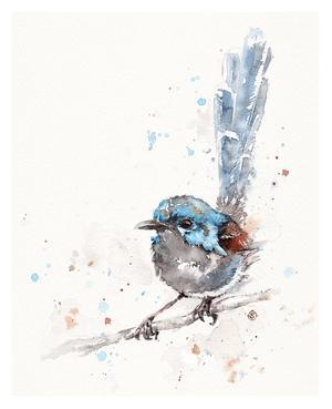 Mischief in the Making (Variegated Fairy Wren) by Sillier than Sally