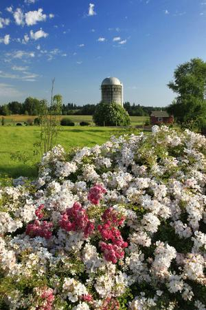 https://imgc.allpostersimages.com/img/posters/silo-and-wild-roses-in-marion-county-oregon-usa_u-L-PN6VS00.jpg?p=0