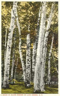 Silver Birches, Lake George, New York