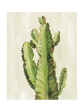 Front Yard Cactus II by Silvia Vassileva