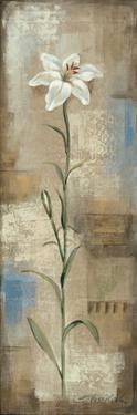 Spring Grace I by Silvia Vassileva