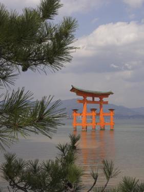 Floating Torii, Viewed Through Pine Tree, Itsuku Shima Jinja, Miyajima, Honshu, Japan by Simanor Eitan