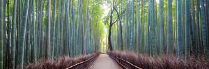 Arashiyama Bamboo Grove, Kyoto, Japan by Simonbyrne