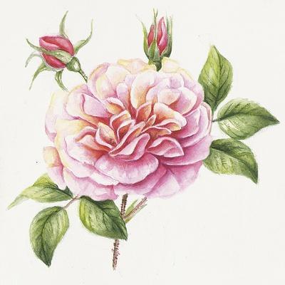 https://imgc.allpostersimages.com/img/posters/single-rose-2_u-L-Q1CAB380.jpg?artPerspective=n
