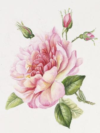 https://imgc.allpostersimages.com/img/posters/single-rose-3_u-L-Q1CABJS0.jpg?artPerspective=n